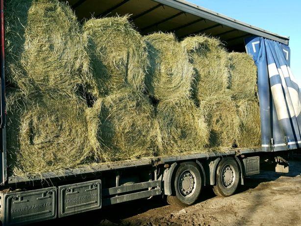 Siano dla koni bardzo dobrej jakości ze stodoły w belkach z dowozem