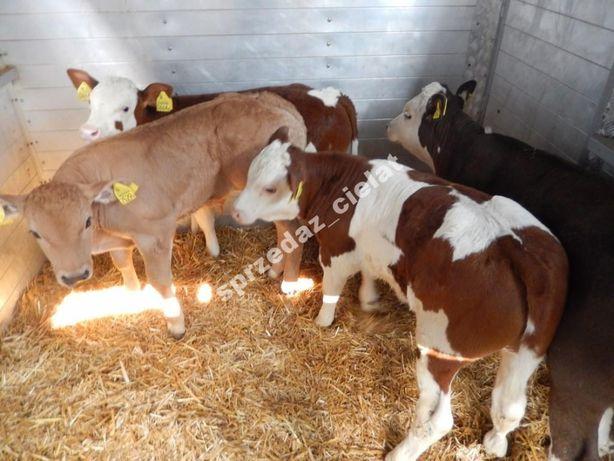 Byki byczki mięsne cielęta cielaki sprzedać cieląt żarłaki odsadki
