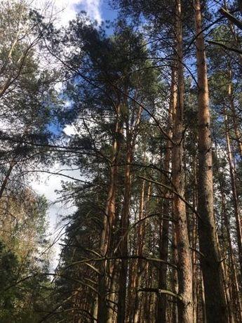 Продажа участка 2га лес Солтановка Стугна Одесское направление