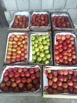 sprzedam jabłka 2,50 1kg 15kg 30zł dowioze warzywa ziemniaki