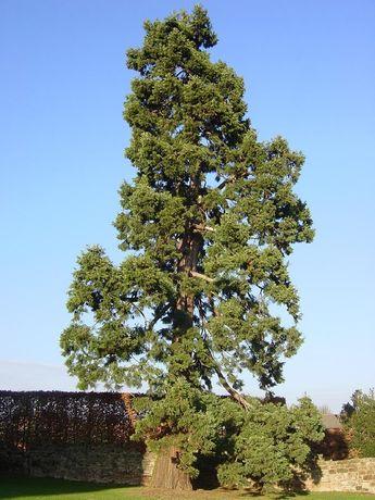 Спил деревьев не дорого!