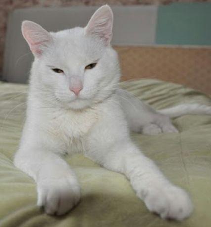 Пропал белый кот Пр.Отрадный час. сектор