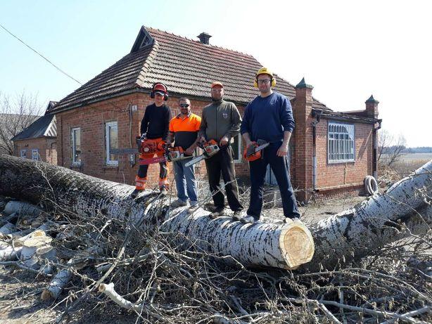 спилить дерево спил аварийные деревья распилить бензопильщик лесоруб