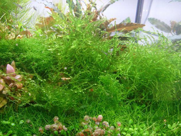 Mchy do akwarium różne gatunki