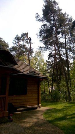 Wycinka Drzew Czyszczenie działek Rębak