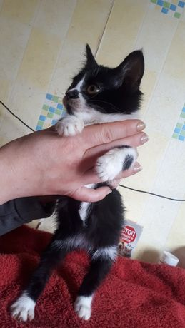 Белочка котенок девочка знает лоток возраст 2.5 месяца
