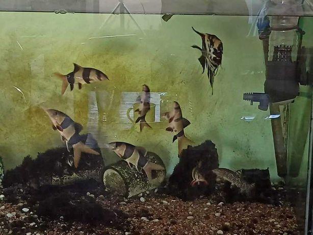 Cardume de peixes grandes