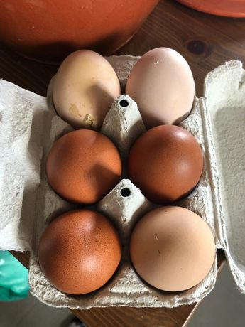 Ovos  muito bons e caseiros