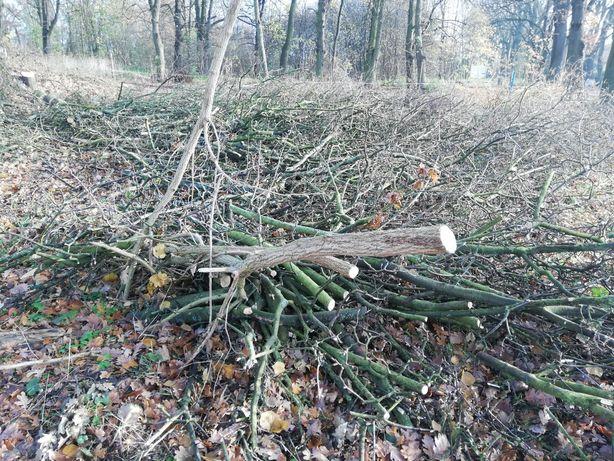 Oddam drewno gałęzie za darmo