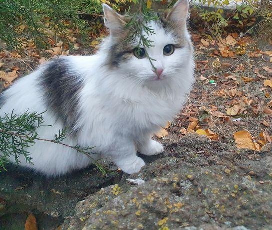 Милый котенок,  около 4х месяцев