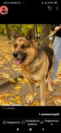 Пропала найдена собака на Кремлёвской