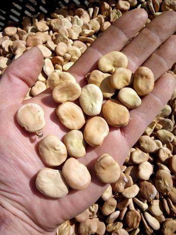Nasiona bobu Bachus