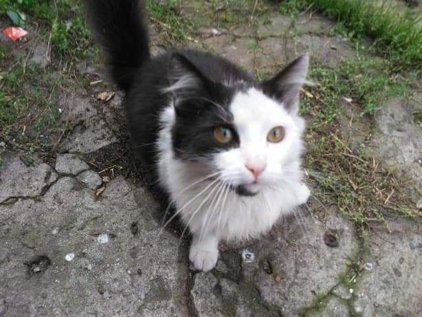 Zaginął kot - Azory