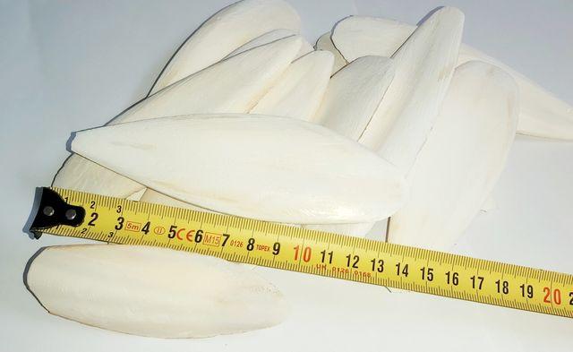 Sepia duża 3 karma ślimak 500 gr.