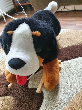 Bujak pies na biegunach