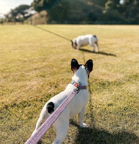 Coleira e guia para cachorro