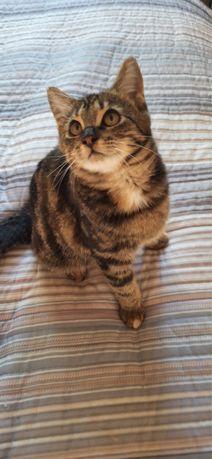 Кошка, 4-5 месяцев ищет семью