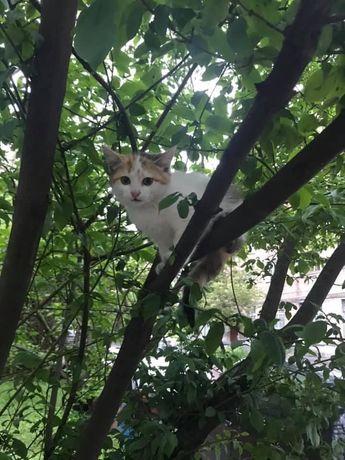 Найден котенок, ищет старого или нового хозяина