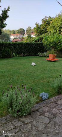 Manutenção jardins, paisagismo, limpeza de terrenos.