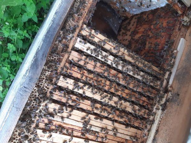 pszczoły odkłady, rodziny pszczele również z ulami