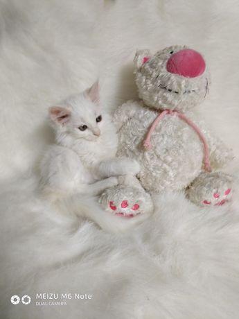 Куколная кошечка Снежа 1.5 мес.