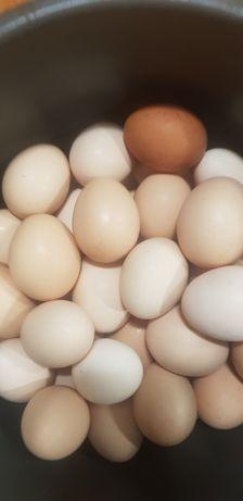 Яйцо домашнее свежайшее