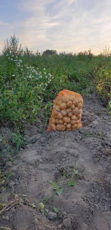 Ziemniaki Denar Vineta15kg