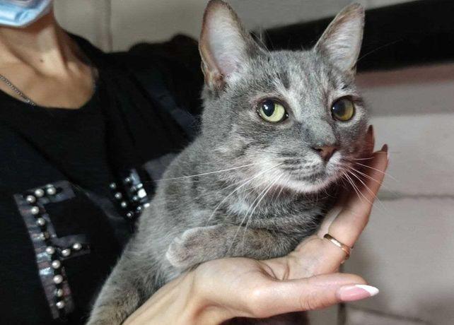 Марися, кішечка-красуня із аристократичною зовнішністю, 1 рік, Кішка
