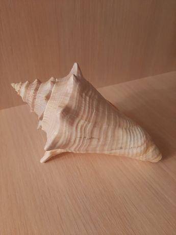 Океаническая ракушка