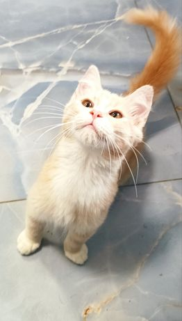 Котик Персик подаруйте дім