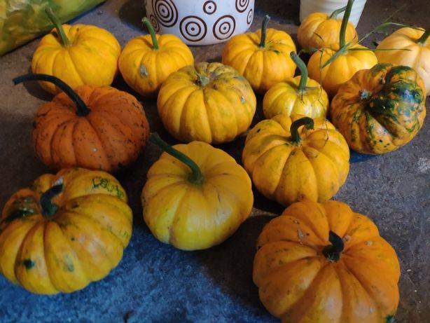 Dynia pomarańcza i żółta - 5 sztuk