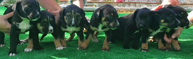 Cachorros para adopção responsável