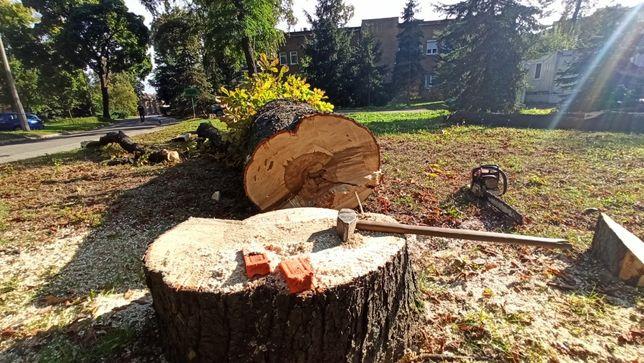 Wycinka Drzew, Pielęgnacja drzew, Frezowanie Pni, Bezpłatna wycena