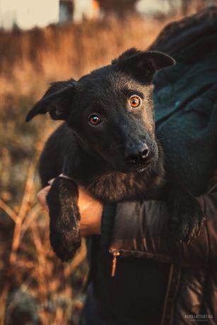 Щенок девочка Блеки, 4 мес, вакцинирована