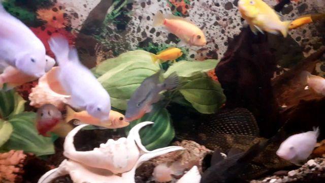 Akwarium Profilowane  300l  z Pokrywa