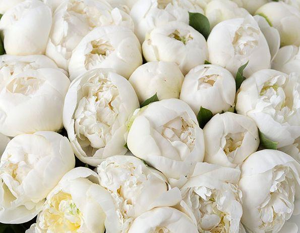 белые пионы с дачи