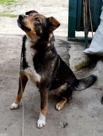 Собака охранник для двора