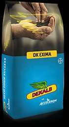 Rzepak ozimy DK EXIMA Dekalb nasiona 2021 kwalifikat na Buteo