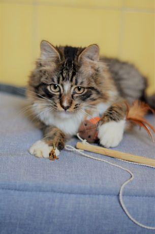Котенок Саймон ищет дом!