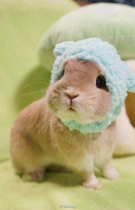 Kit coelhos anões domesticados Odivelas - imagem 1