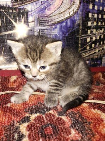 Котенок на бронь