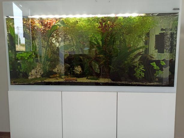 Akwarium Glossy Aquael 250L