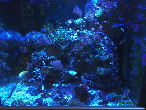 Aquario Salgada Complete AI Prime Reef