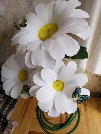 Цветы ростовые ромашки