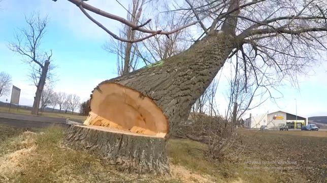 Profesjonalna wycinka i pielęgnacja drzew metodą alpinistyczną