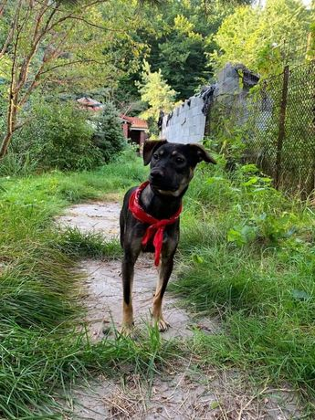 Оскар шукає дім, собака, цуцик, Щенок