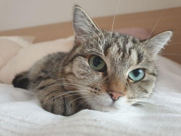 Spokojna szaro-bura kotka LUNA szuka domu