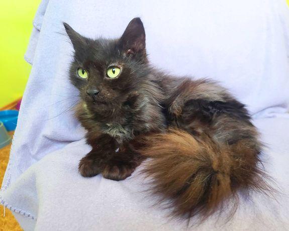 Маленька киця Міла в мріях про родину, 2роки, кішка, стерелізована