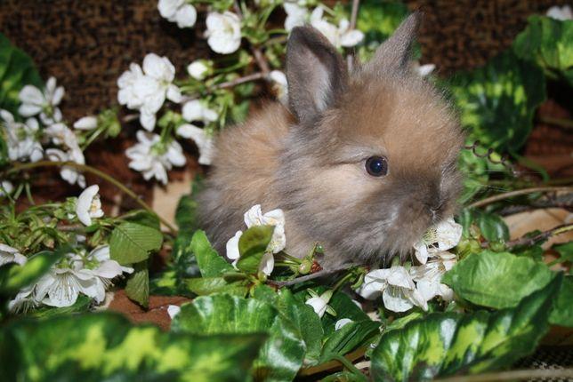 Продаём карликовых кроликов