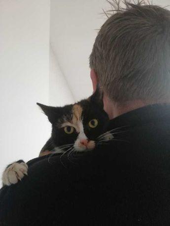 Dwie kotki szukają człowieków!